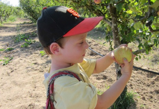 johnny appleseed, organic apple juice, apple picking, green parenting, green family activities, fall family adventures, lead free apple juice, arsenic in apple juice
