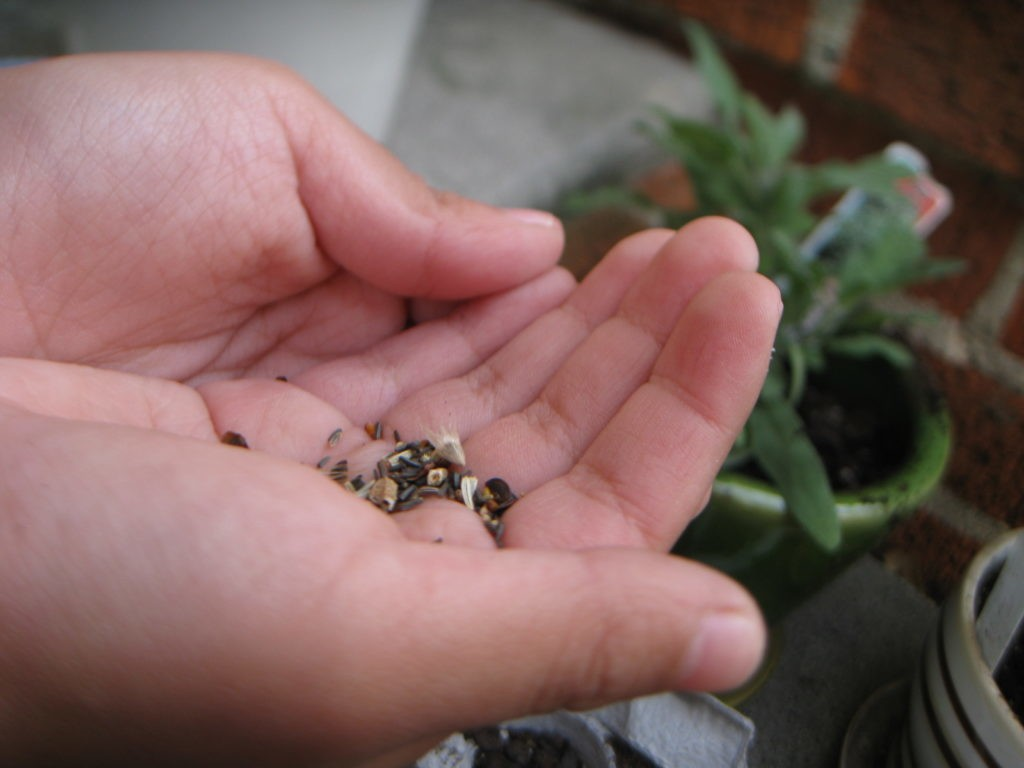Gardening Tips for Kids: Get Those Green Thumbs in Gear for Spring