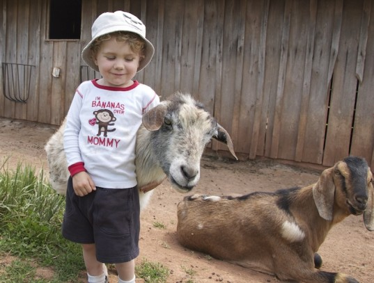 green family, experiential gifts, sponsoring animals, animal sanctuary