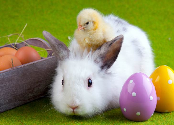5 reasons you should NOT give your kids real bunnies chicks