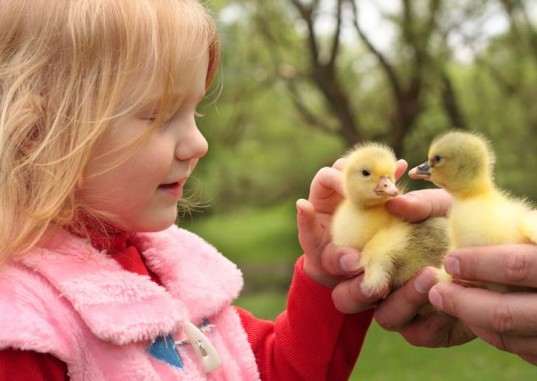 live animals, live easter bunny, live easter chick, animal cruelty , animal welfare, dyed easter chicks, easter animals, ethical easter, green easter