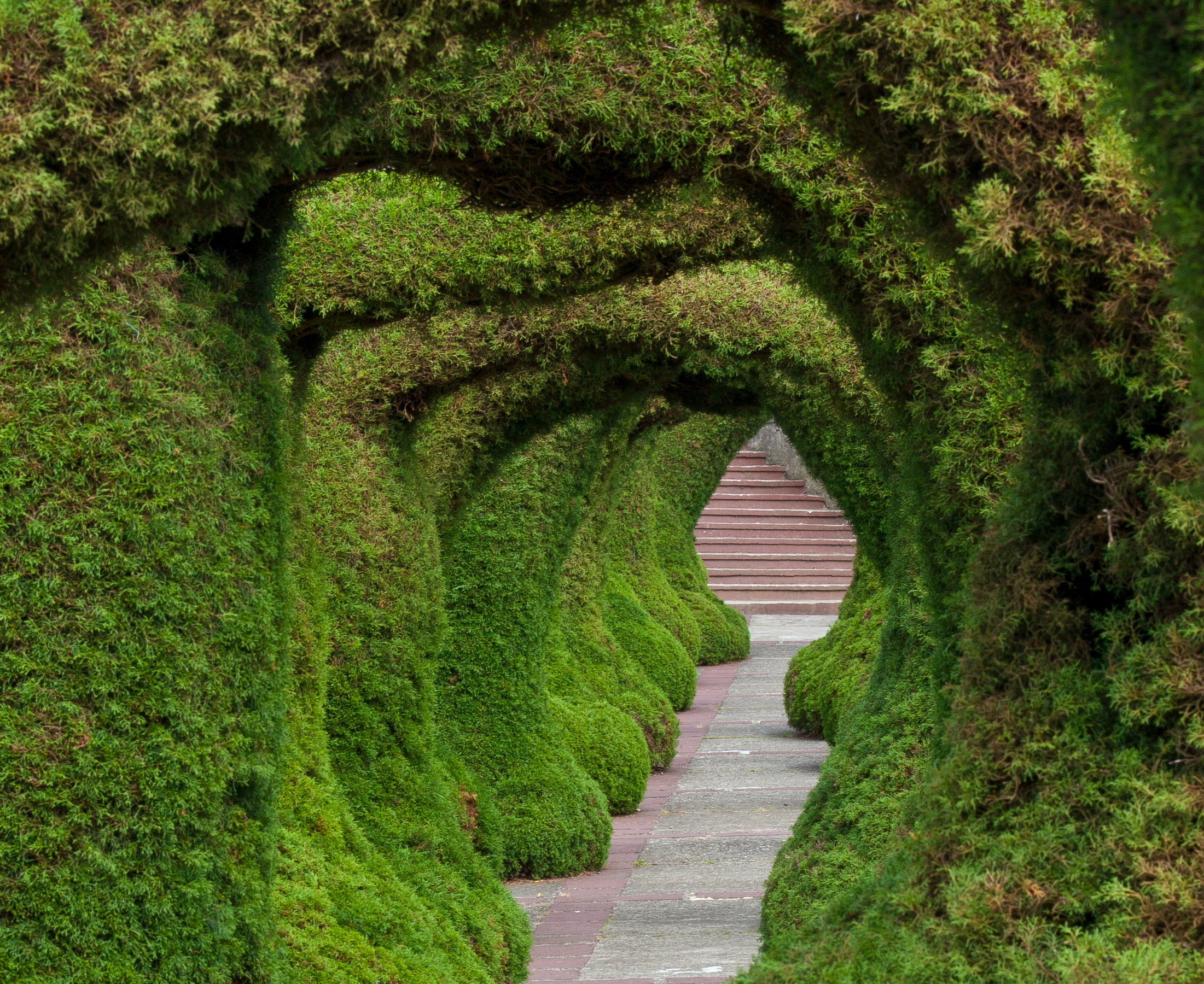 10 breathtaking tree canopies natural tunnels that look like