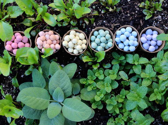 seedles, green design, seed balls, kid friendly