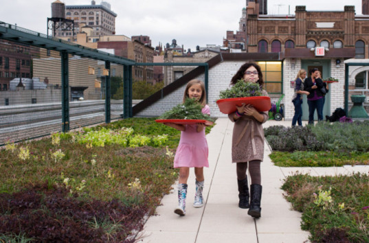 new york city, new york public schools, new york city schools, green roofs, rooftop gardens, solar panels on schools, nyc schools solar panels, nyc schools roof garden, nyc green roof, students learning about solar power, environmental education, learning about plants, learning about solar power