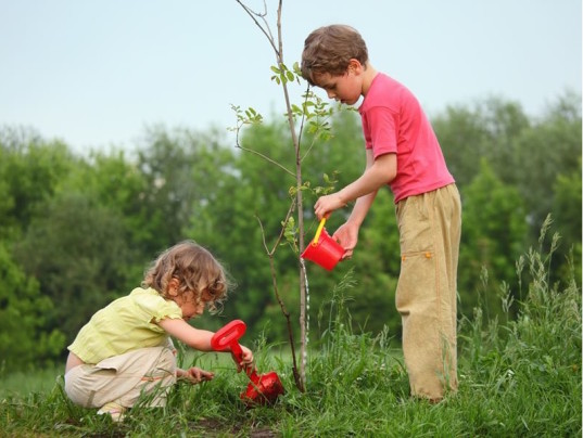 planting tree, green gift, Mother's day gift, mother's day ideas
