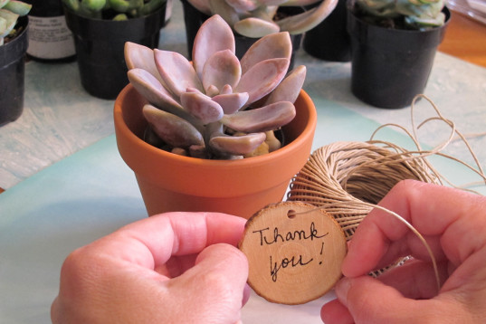 teacher gifts, mini succulent gifts, diy succulent gift, succulent teacher gift, easy teacher gifts, eco-friendly teacher's gift