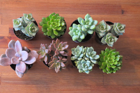 teacher gifts. mini succulent gifts, diy succulent gift, succulent teacher gift, easy teacher gifts, eco-friendly teacher's gift