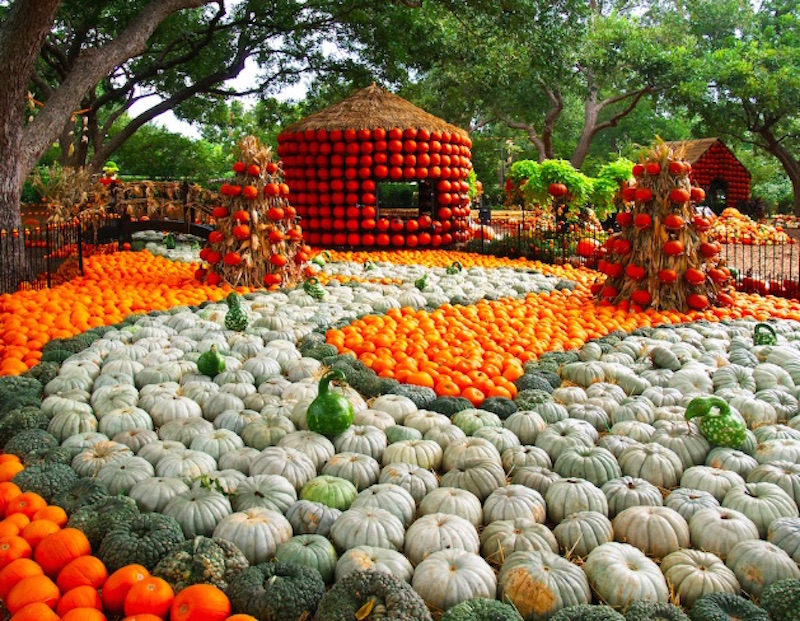 Autumn Festival At The Dallas Arboretum Features More Than 90,000 Pumpkins!  | Inhabitots