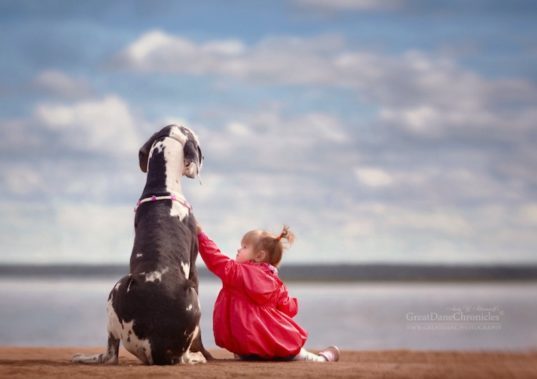 photography, kid photography, art, dog photography