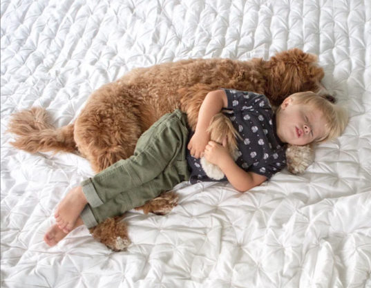 Buddy and Reagan, Sandy Swiridoff, foster care, foster parents, labradoodle, sustainable design, eco design