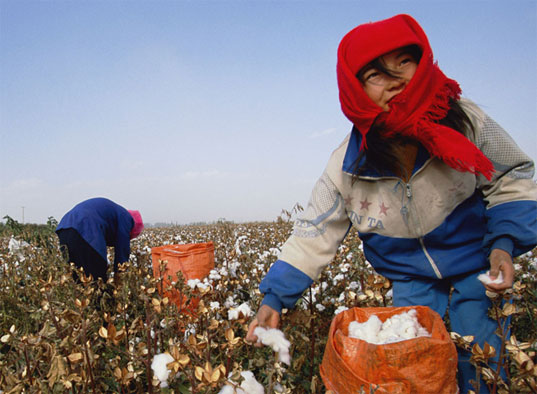 Cotton picking in China