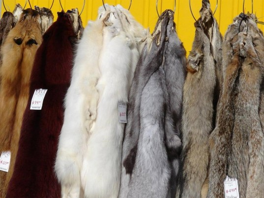 fur, eco-fashion, sustainable fashion, green fashion, ethical fashion, sustainable style, animal cruelty, skin trade