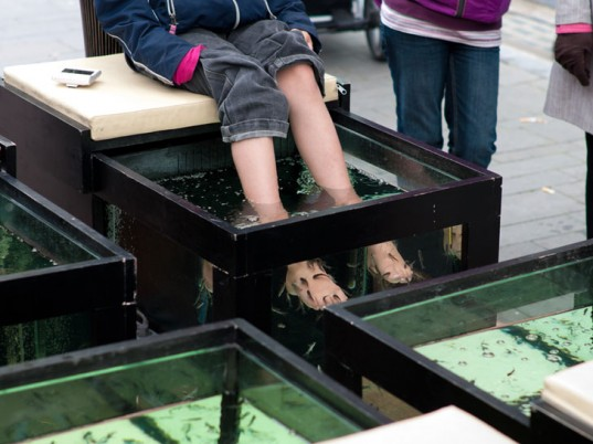 fish pedicures, Centers for Disease Control and Prevention, CDC, eco-fashion, sustainable fashion, green fashion, ethical fashion, sustainable style, eco-beauty, eco-friendly beauty, sustainable beauty, fish, animal welfare, animal cruelty, animal rights