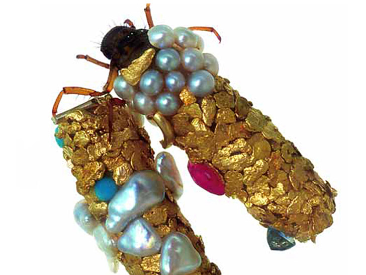 "Artists Enlist Caddisfly Larvae to ""Build"" Jewelry From Gold, Gemstones"