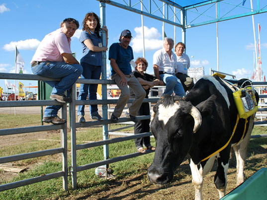 cows, methane, cow backpacks, eco-friendly backpacks, sustainable backpacks, eco-fashion, sustainable fashion, green fashion, ethical fashion, sustainable style, global warming, climate change, Instituto Nacional de Tecnología Agropecuaria, Argentina, bizarre eco-fashion, farting