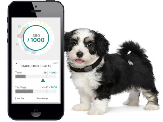 Whistle GPS, No More Woof, Fitbark, eco-fashion, sustainable fashion, green fashion, ethical fashion, sustainable style, wearable technology, eco-friendly pets, sustainable pets, animal welfare, activity trackers