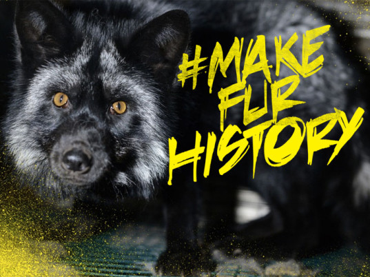 #MakeFurHistory, FurDiscounts.com, fur, animal fur, LUSH, LUSH Cosmetics, eco-fashion, sustainable fashion, green fashion, ethical fashion, sustainable style, eco-fashion websites, animal welfare, animal cruelty, animal rights