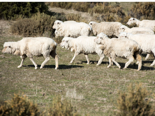 Patagonia, Ovis 21, Ovis XXI, eco-fashion, sustainable fashion, green fashion, ethical fashion, sustainable style, wool, People for the Ethical Treatment of Animals, PETA, animal rights, animal welfare