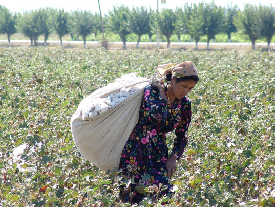 Uzbekistan, Uzbek cotton, Anti-Slavery International, workers rights, human rights, forced labor, child labor, eco-fashion, sustainable fashion, green fashion, ethical fashion, sustainable style, cotton, videos