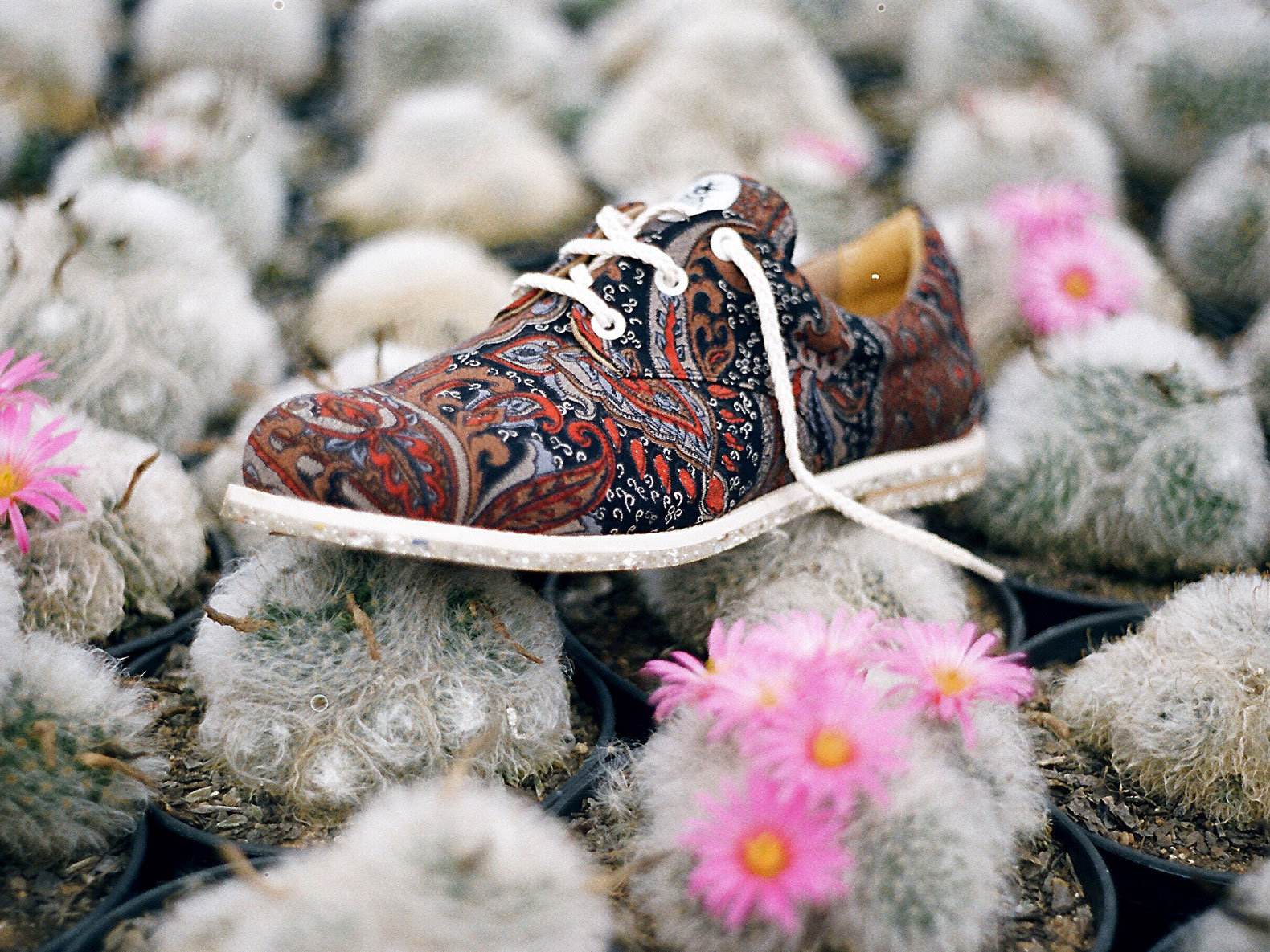 Insecta Turns Vintage Clothes Recycled Plastic Bottles Into Vegan Shoes