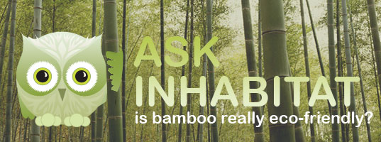 Bamboo Habby, Habby with Bamboo, Habby the Inhabitat Owl, Ask Inhabitat, Is Imported Bamboo really sustainable?  Is Bamboo sustainable?