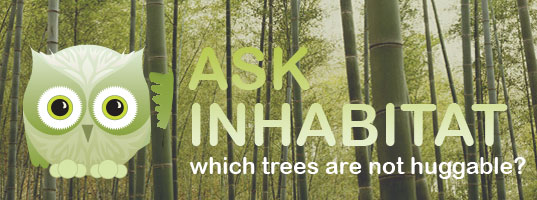 Ask Inhabitat, Habby the Inhabitat Owl, illustration by Jill Fehrenbacher, Which trees are not huggable, Inhabitat Q&A, Carrotwood trees